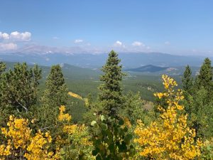 View of green and yellow trees and mountains in the background